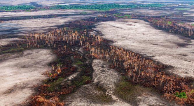 Desmatamento na Amazônia está próximo do ponto de 'não retorno'