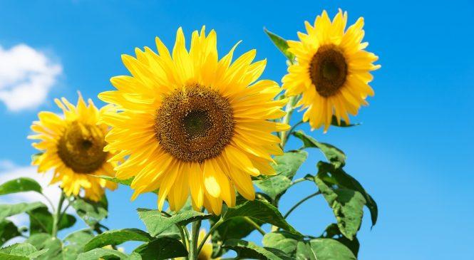 Que a janela de setembro nos traga flores e sol de primavera