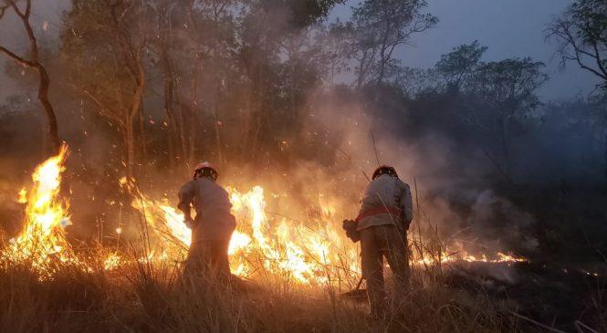 Destruição do Pantanal em 2020 é a maior que dos últimos 6 anos somados