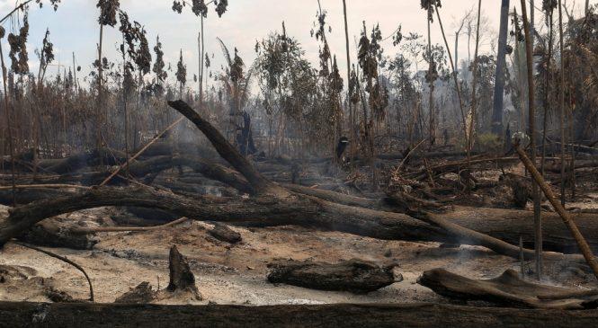 Amazônia perdeu 1/4 de sua cobertura florestal nos últimos 18 anos