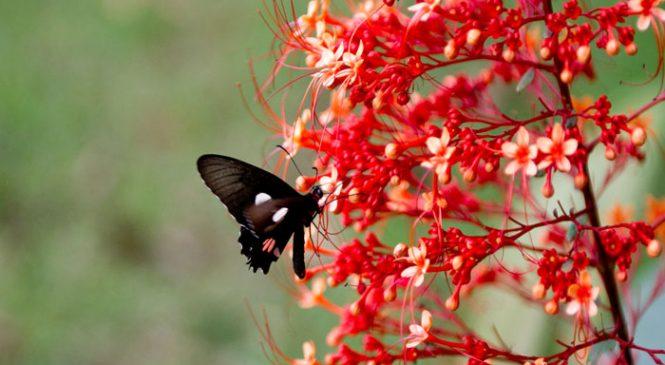 É primavera: falemos de flores e 'cuidemos da vida'
