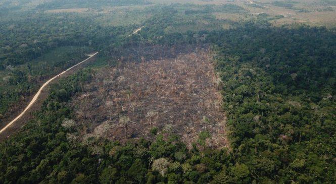 Desmatamento na Amazônia bate novo recorde e cresce 9,5% de 2019 a 2020