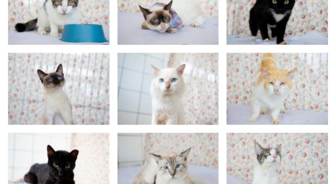 Gatos recolhidos no Mercado da Produção de Maceió estão prontos para adoção
