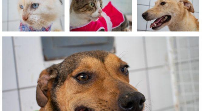 Cães e gatos resgatados continuam disponíveis para adoção em Maceió