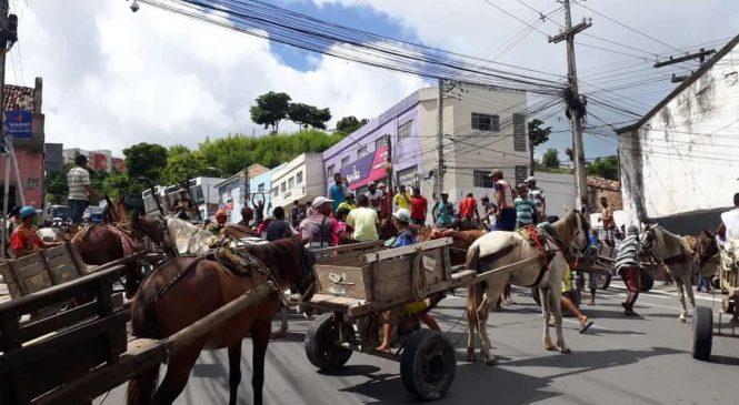 ALE discute proibição de carroças puxadas por animais em Maceió