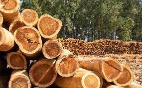 Delegado da PF diz que dinheiro do contrabando de madeira financia políticos