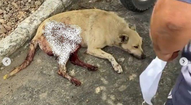 Comerciante que esfaqueou e matou cadela que pegou pedaço de carne é preso em Delmiro