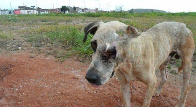 Animais abandonados: A dor que passa imune ao coração de tanta gente