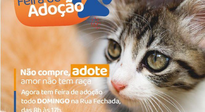 Vigilância em Zoonoses leva Feira de Adoção domingo (10) à Rua Fechada de Maceió