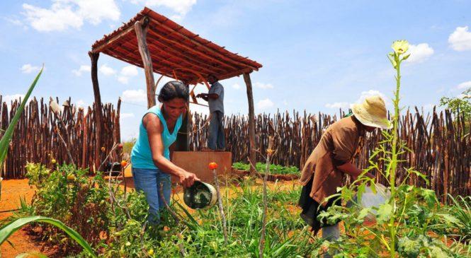 ALE aprova PL que autoriza Governo a anistiar e renegociar dívidas de produtores rurais